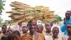 Getreide, das der Dürre trotzt