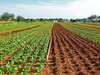 Erhöhung der Produktsicherheit in einer industrienahen Salatwaschstrecke mit plasmaprozessiertem Wasser (PPW)