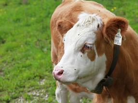 FrieslandCampina full speed ahead towards sustainable milk