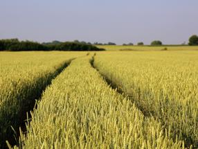 Genetics technology could lead to more crops, fresher food