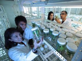 Moderne Lebensmittelbiotechnologie: Deutschland und China wollen gemeinsam forschen