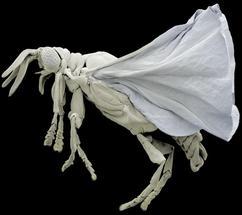 'Insekten aus dem All' sind mit Käfern verwandt