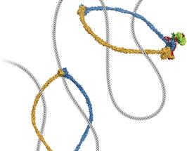 SMC-Proteinkomplexe
