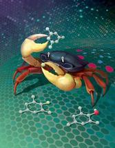 Phthaloyl Peroxide Crab
