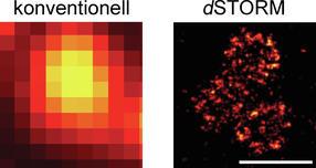 Molekulare Lernmaschinen unter dem Mikroskop