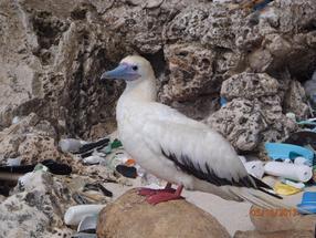 garbage ocean pollution