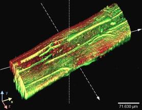 Künstliche Biofilme für ressourcenschonende Biotechnologie