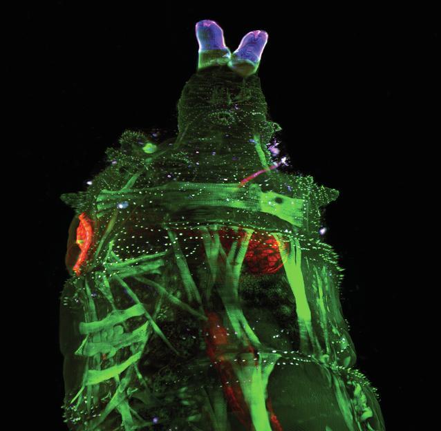 Full Screenfull Screenfull Screenfull Screenfull Screen5. LaVision BioTecu0027s  UltraMicroscope II Delivers Light Sheet Fluorescence Microscopy ...