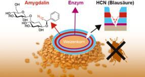 Chemiker entwickeln neuartige Beizmethode: Möglicher Ersatz für Pestizide