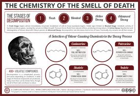 The Chemistry of the Odour of Decomposition