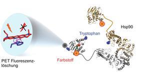 Licht im Maschinenraum eines Helferproteins