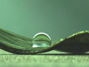 Bakterien schützen sich durch Lotuseffekt: Biofilme: Forscher finden Ursachen für wasserabweisende Eigenschaften