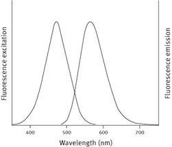 bmg-molecularprobe-166-1