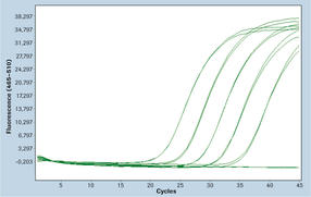 RealTime ready RT-qPCR Assay Development and Qualification